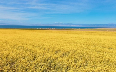 Private Day Tour to Qinghai Lake and Chaka Salt Lake from Xining