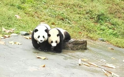Full-Day Private Tour of Chengdu and Panda Base with Lunch